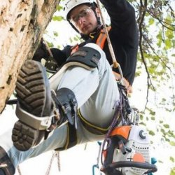 Downers Grove Tree Service